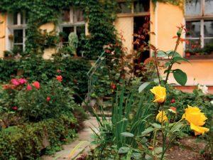 Zahrada pro pět koček