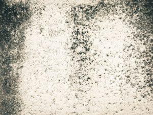 Náročný boj s plísní